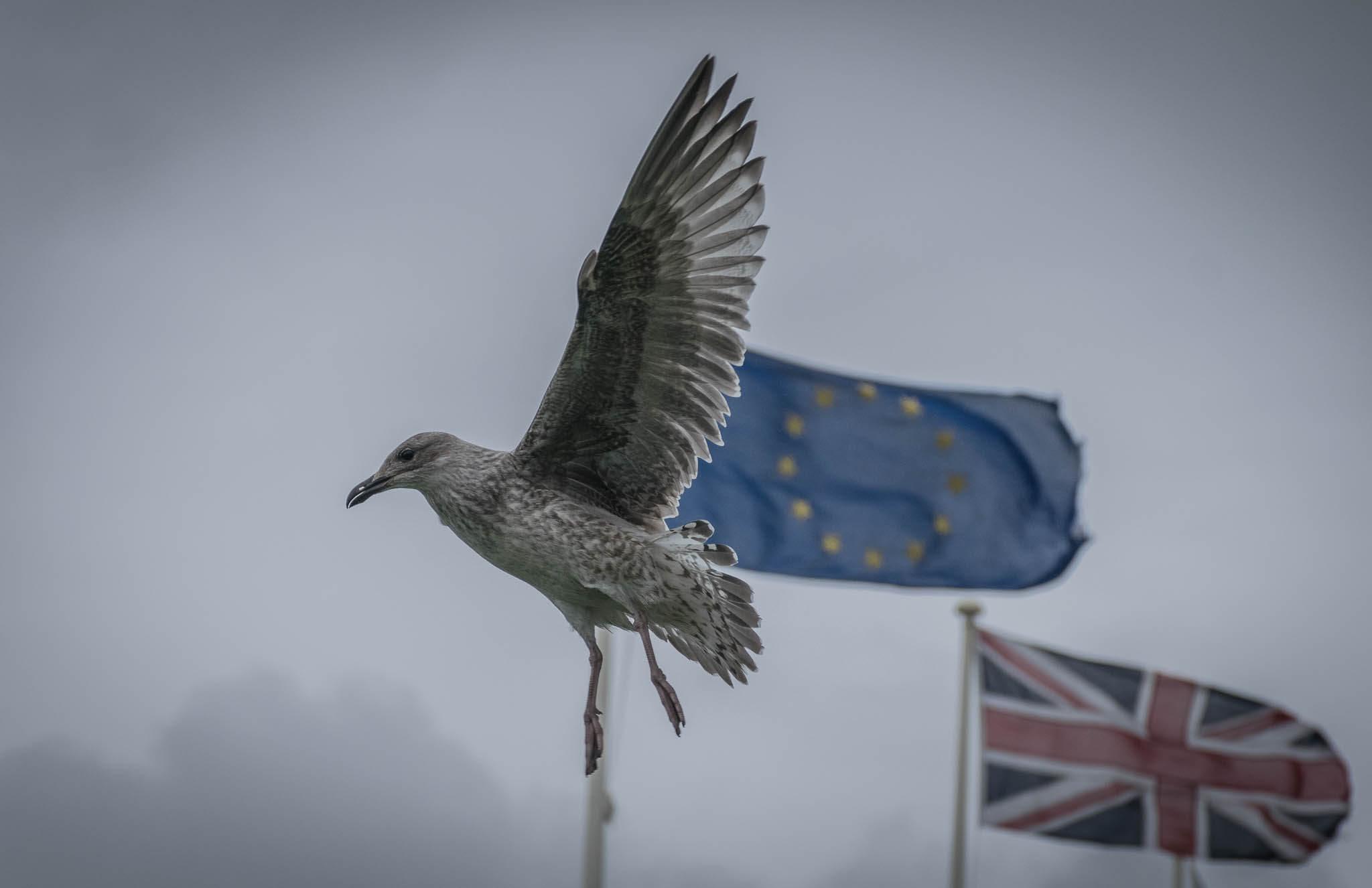 Drapeaux du Royaume Uni et de l'Union européenne, illustration du Brexit